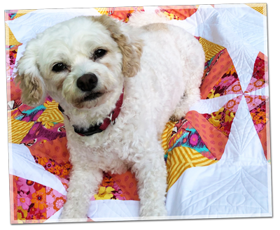 Cutest dog ever on quilt by Moonrise Quilting